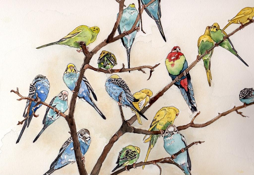 parakeets-small