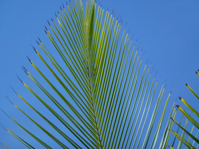 skypalm1